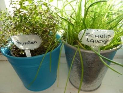 Plant plugs made of shower gel bottle