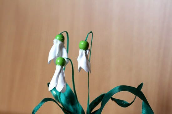 SnowDrops_close_resize_resize