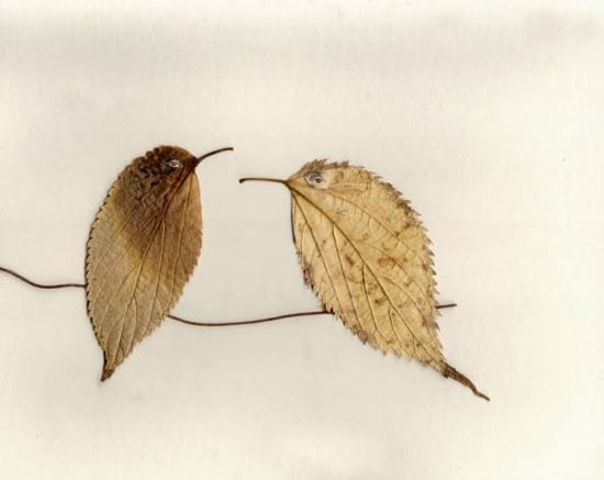 Birds on Leaves Wood & Organic