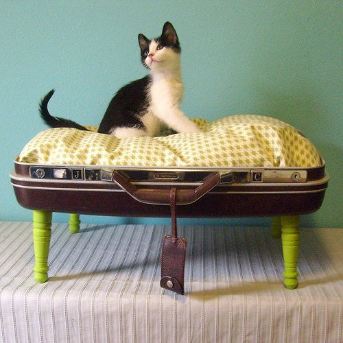 suitcase petbed Suitcase pet beds in fabric accessories  with suitcase PET Animals