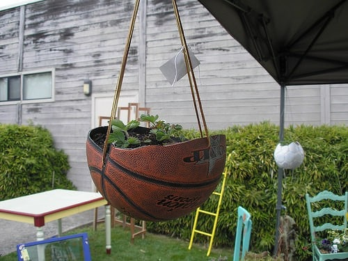 planted basket ball Planted basket ball in plastics  with Garden