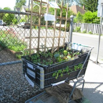 From Old Shopping Cart To Gardening Planter