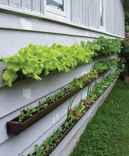 Repurposed rain gutters in metals  with Plant Garden