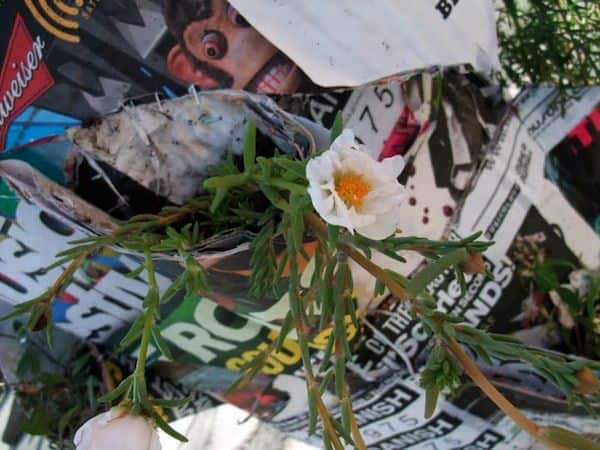 Poster Pocket Plants Recycling Paper & Books
