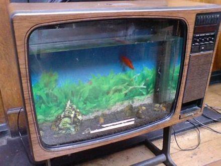 TV fish tank