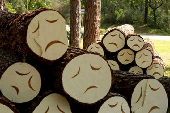 Poor little trees Recycled Art Wood & Organic