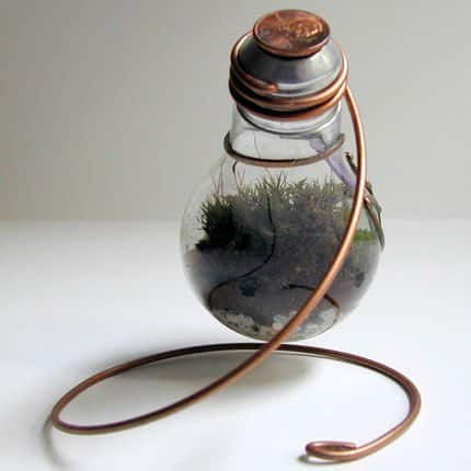 Terrarium Made From Discarded Light Bulb Lamps & Lights Recycled Glass