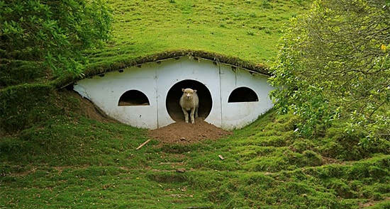 Hobbiton used by sheeps in wood architecture  with movie film Animals