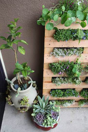 DIY : Pallet Garden in wood pallets 2 diy  with Pallets Garden ideas DIY Balcony