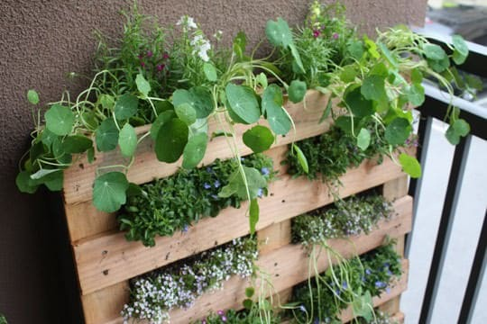 DIY : Pallet Garden in wood pallets 2 diy  with Pallets Garden DIY Balcony