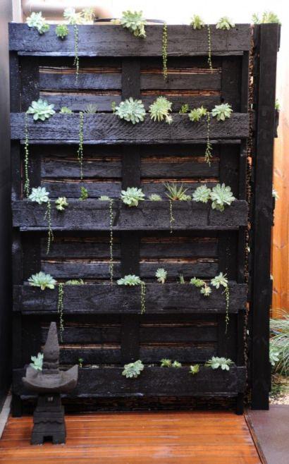 Paletto-Cactus
