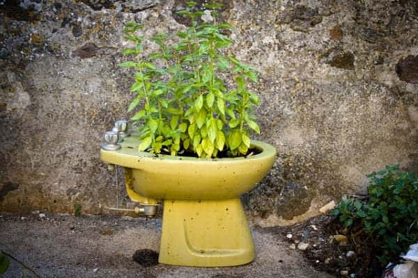 Bidet garden in diy  with Plant Garden ideas