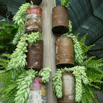 Cheap Planters From Recycled Tin Cans