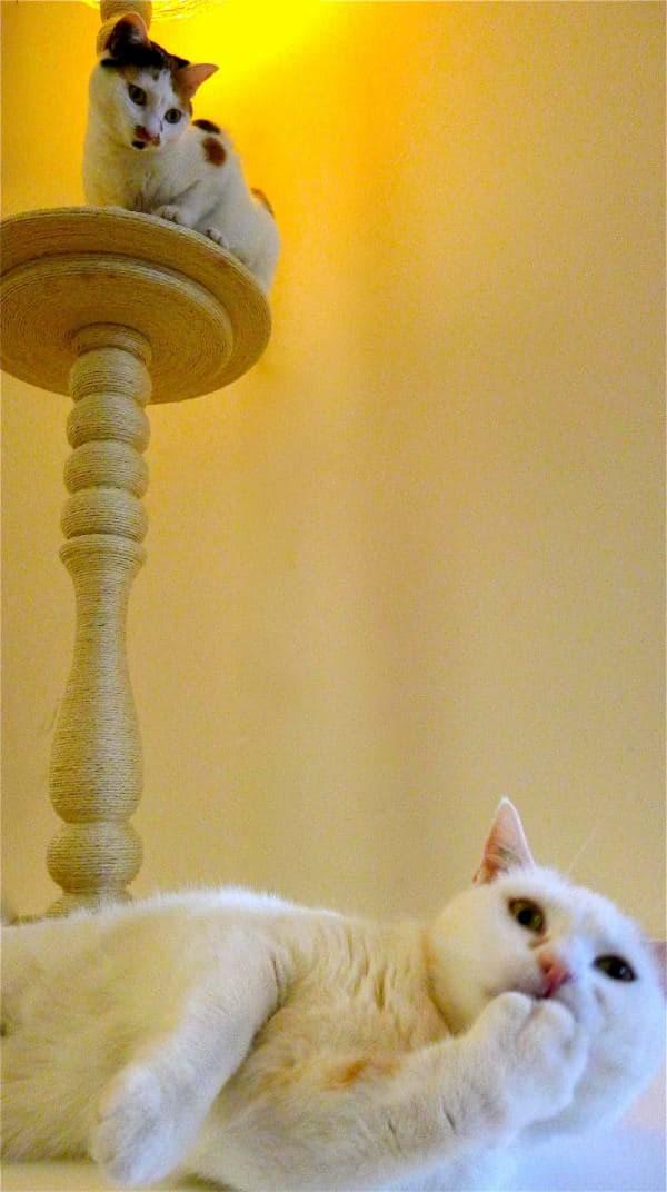 Lighting Cat Tree Lamps & Lights