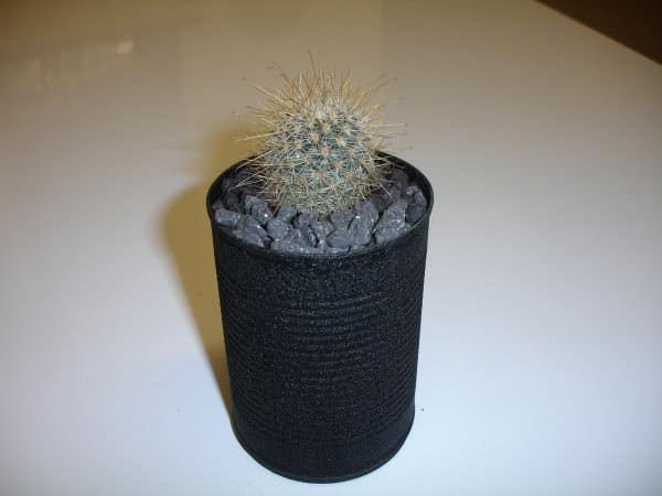 Cantus! The Cacti In Cans Accessories