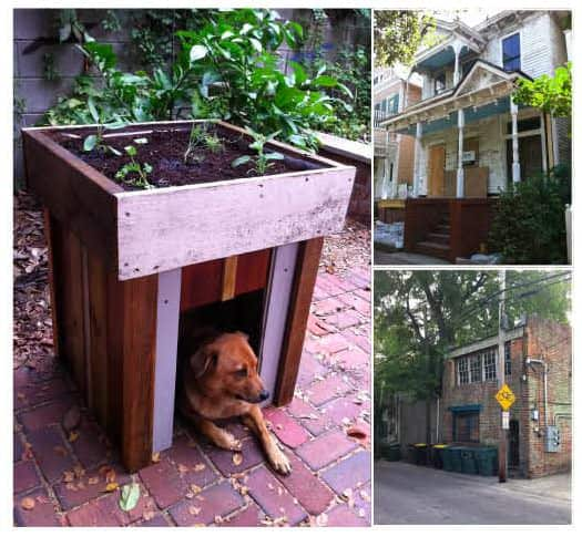 Dog house with a rooftop garden in wood  with Wood Upcycled Salvaged Reused reclaimed pets PET Garden Dog