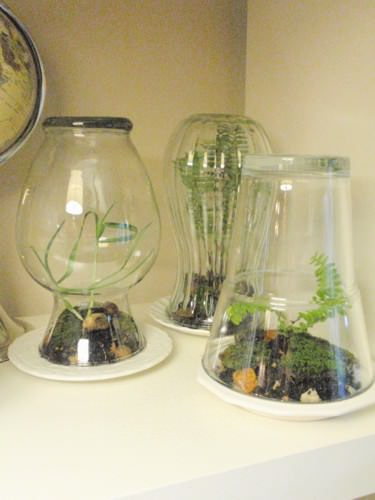 DIY Terrariums in diy  with vase terrarium Plant Glass