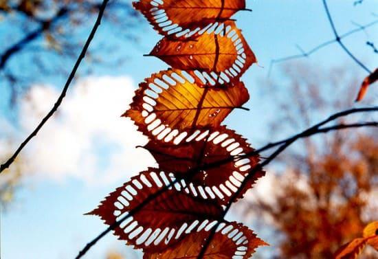 Walter Mason Land Art Recycled Art Wood & Organic