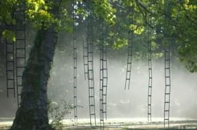 L&#8217;arbre aux chelles (Ladders tree)