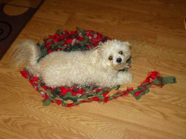 Fabric Scrap Pet Rug Clothing Do-It-Yourself Ideas