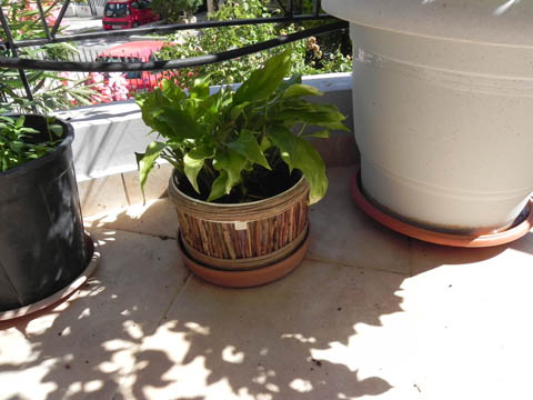 Reusing materials for my plants at balcony Do-It-Yourself Ideas Wood & Organic