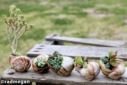 snail shell garden2 DIY : snail shell mini garden in wood diy  with nature landscape Garden 