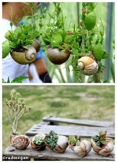 DIY: Snail Shell Into Mini Garden Planters