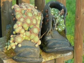 Flower pots boots fence