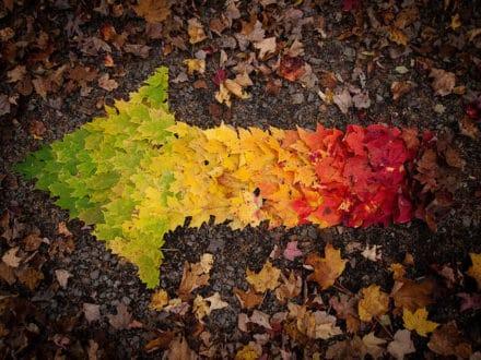 Autumn Spectrum
