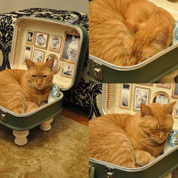 Cat Bed From Upcycled Suitcase