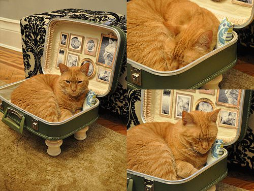 upcycled cat bed suitcase1 Cat bed from upcycled suitcase in fabric diy  with suitcase pet bed PET Animal 