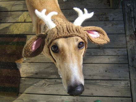 Dog --> Moose :)