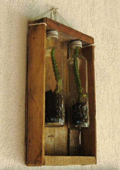 Plants+Glass Bottles
