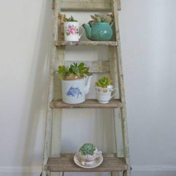 Succulent Garden from an Old Ladder