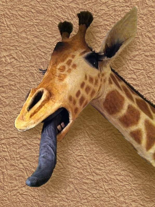 Giraffe02-600px