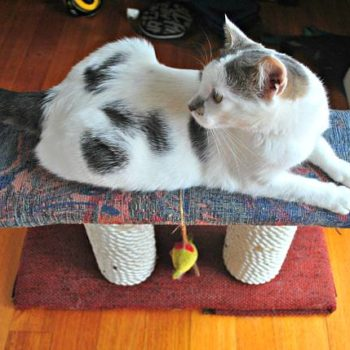 DIY: Cat Scratching Post