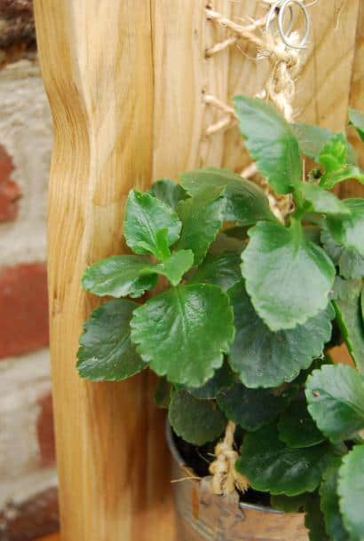 Woven wood pallet flower holder