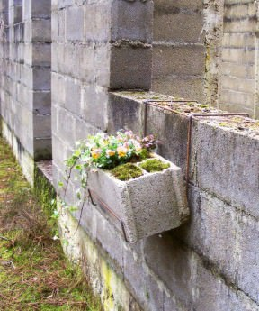 Cinderblock planter