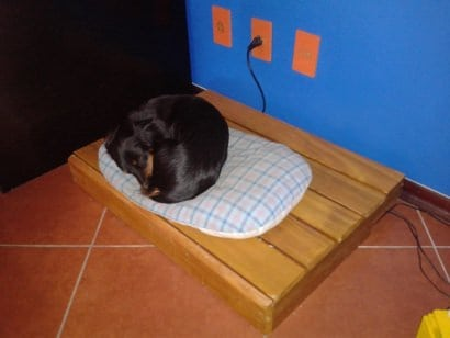 New bed for the dogs!
