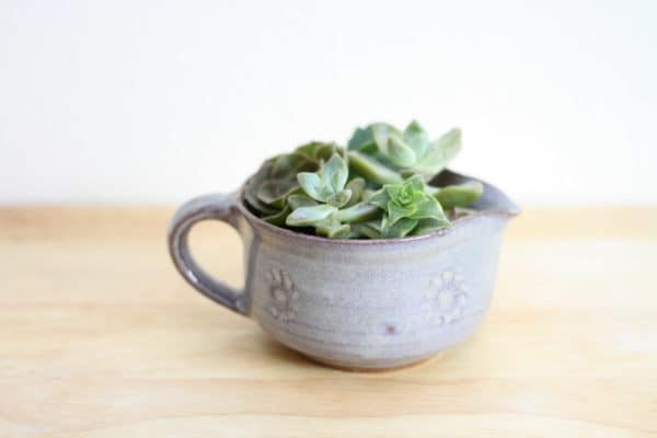 Ceramic Cup Succulent in garden 2  with