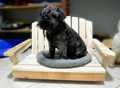 A pallet bed for a pet