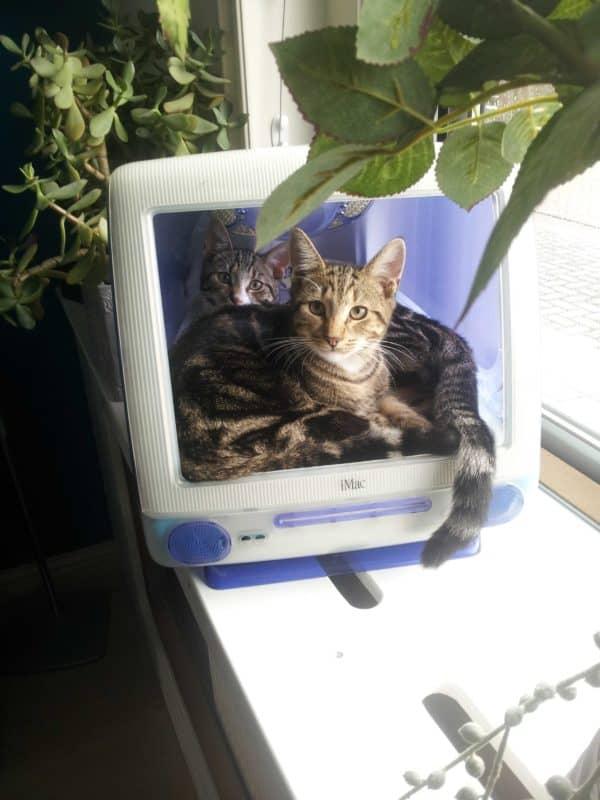 I-cat3