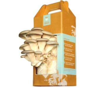 Back-to-the-Roots-Oyster-Mushroom-Kit-0
