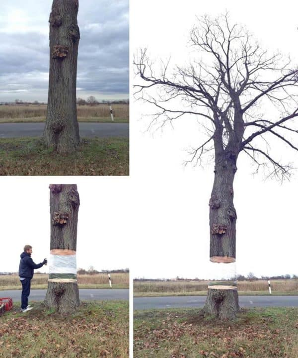 Disappearing tree in wood art  with Tree Street Art Land Art