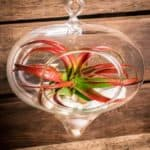 Hinterland-Trading-Air-Plant-Miniata-Terrarium-Kit-Large-Hanging-Glass-Terrarium-Teardrop-with-Seashells-0
