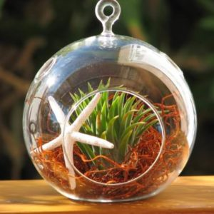 Hinterland-Trading-Starfish-and-Air-Plant-with-Red-Moss-Hanging-Glass-Terrarium-Kit-0