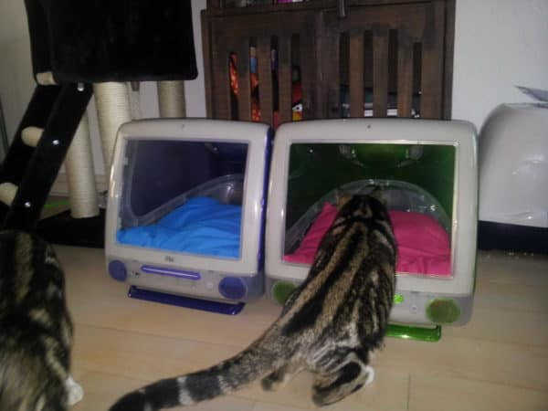 iCat in electronics diy  with Upcycled Recycled iMac Apple