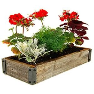 Reclaimed-Barnwood-Planter-Box-Flower-Garden-Kit-Includes-Weathered-Rustic-Barn-Wood-Planter-Soil-Flower-Seeds-Instructions-0