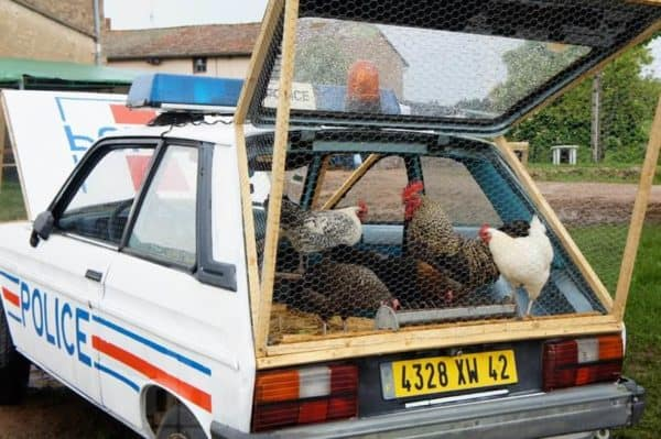 Benedetto Bufalino repurposes an old police car into a modern chicken coop in garden 2  with