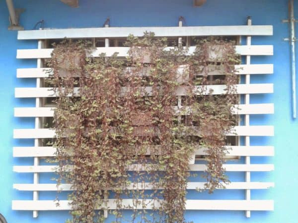 DIY: Vertical Garden Do-It-Yourself Ideas Garden Ideas